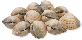 Farm Raised Cedar Key Clams