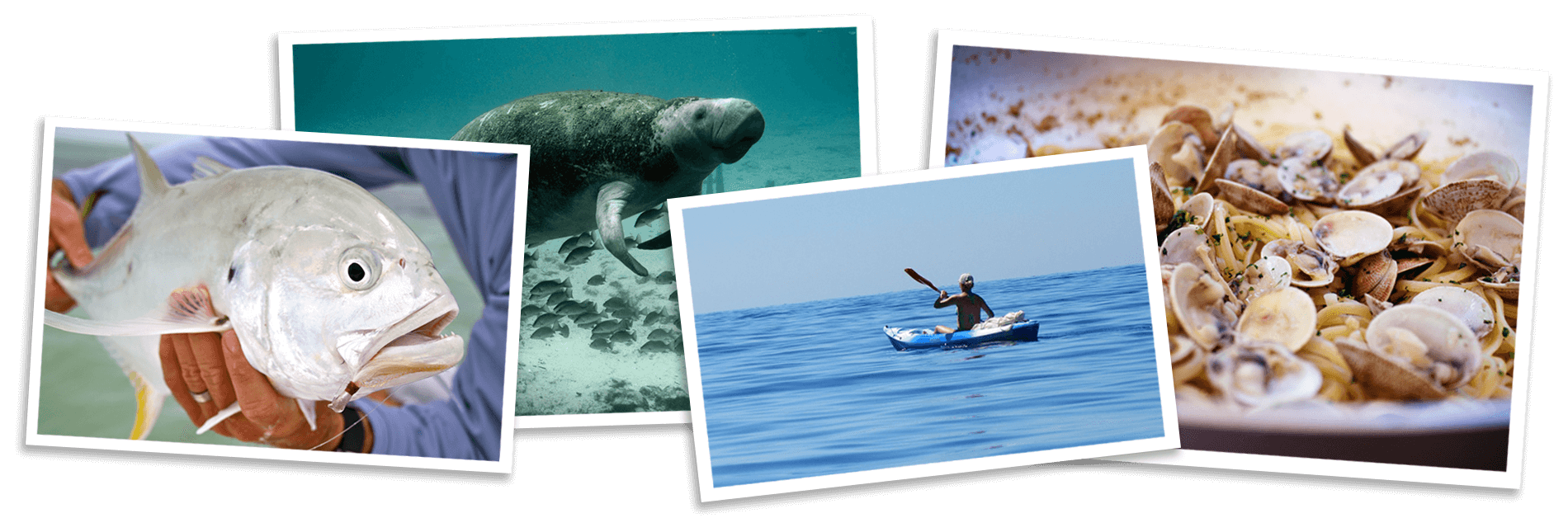 Visit Cedar Key - Kayak, Fish, See Manatees, Clam seafood dinner